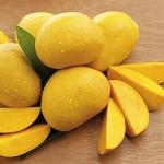 Hạt xoài có thể giúp điều trị viêm âm đạo hiệu quả
