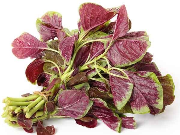 Rễ rau dền có thể giúp điều trị viêm âm đạo hiệu quả